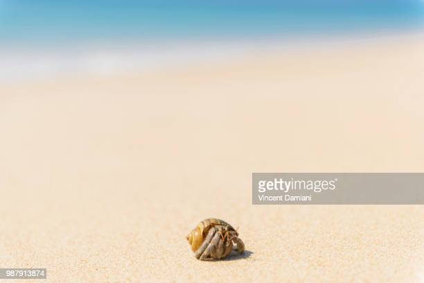 hermit crab on sandy beach - hermit crab stock pictures, royalty-free photos & images
