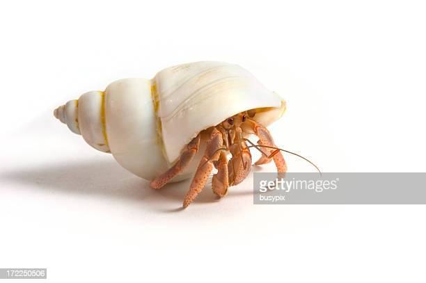 hermit crab - crab stock pictures, royalty-free photos & images
