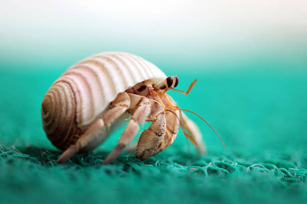 Hermit Crab Running Wall Art