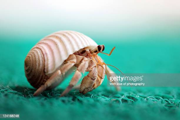 hermit crab running - hermit crab stock pictures, royalty-free photos & images