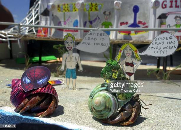Hermit crabs disguised as Spiderman and the Green Goblin walk through a display during the 27th Annual Miss Crustacean Beauty Pageant July 31 in...