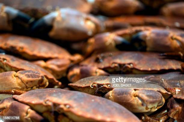 Hermit crabs fished in the east of the Atlantic ocean are displayed at a supermarket on December 21 2012 at the KremlinBicetre outside Paris AFP...