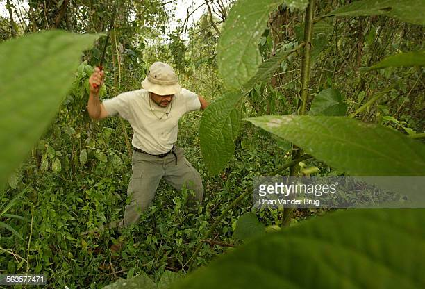 Hernan Arauz whose father Amado was a leader of the first trans–Darien expedition in 1961 hacks away at jungle brush with a machete near Cana in the...