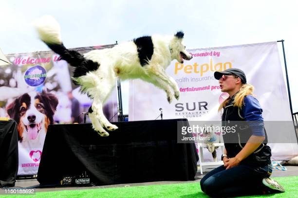Hero the Super Collie performs at the 4th Annual World Dog Day at West Hollywood Park on May 18, 2019 in West Hollywood, California.