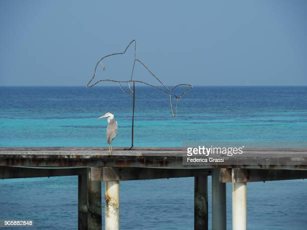 A Heron and a Dolphin (Christmas Light) on Maldivian Pier
