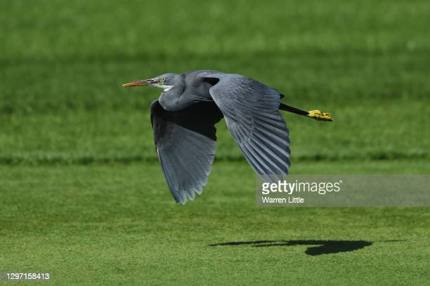 Heron is seen flying during practice ahead of the Abu Dhabi HSBC Championship at Abu Dhabi Golf Club on January 19, 2021 in Abu Dhabi, United Arab...