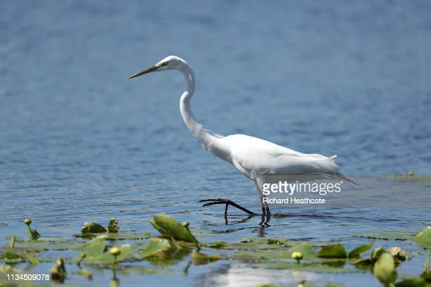 A heron is seen in the water during the second round of the Arnold Palmer Invitational Presented by Mastercard at the Bay Hill Club on March 08 2019...