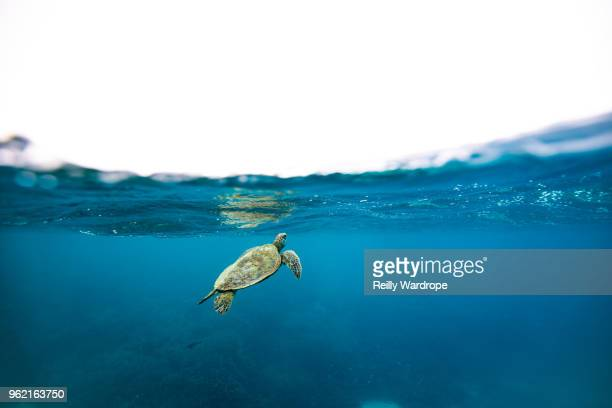 heron island - underwater stock pictures, royalty-free photos & images