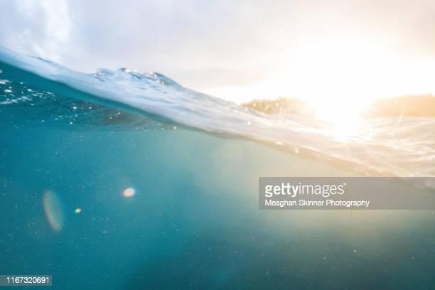 heron island, queensland - ocean floor stock pictures, royalty-free photos & images