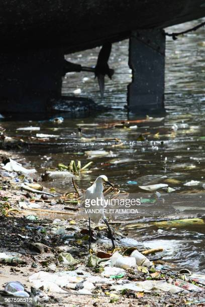 A heron looks for food amid the trash dragged ashore by the polluted waters of Guanabara Bay state of Rio de Janeiro Brazil on February 25 2008 Some...