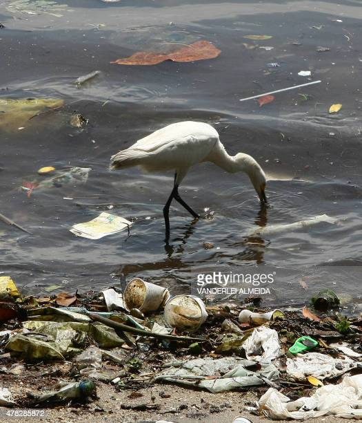 STORY A heron looks for food amid trash lying on the shores of Guanabara Bay state of Rio de Janeiro Brazil on February 25 2008 Some 465 metric tons...