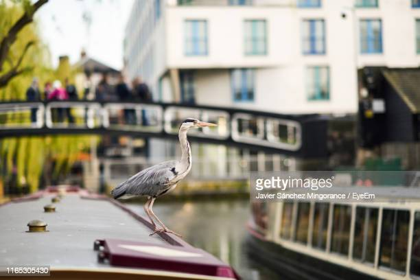 heron perching on boat - wildlife stock pictures, royalty-free photos & images
