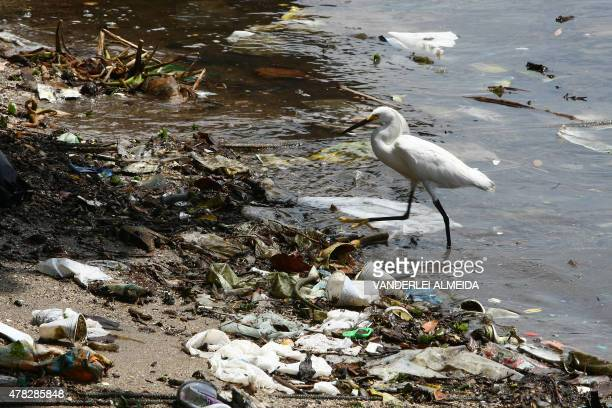 A heron walks amid trash on the shores of Guanabara Bay state of Rio de Janeiro Brazil on February 25 2008 Some 465 metric tons of waste either...