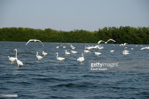 Herons fly over the water in the mangrove swamp located behind Boquilla beach on February 1, 2019 in Cartagena, Colombia. The Boquilla mangrove...