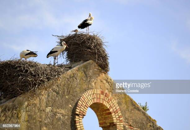 herons in their nests on the roof of an old factory - day old chicks stockfoto's en -beelden