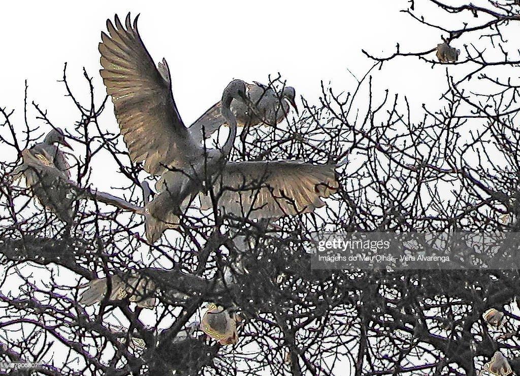 Herons nest : Foto de stock