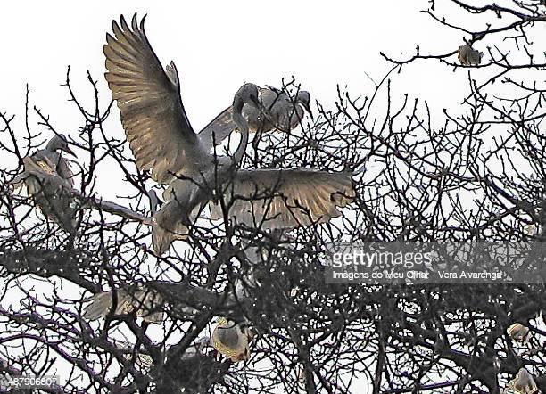 herons nest - olhar para cima fotografías e imágenes de stock