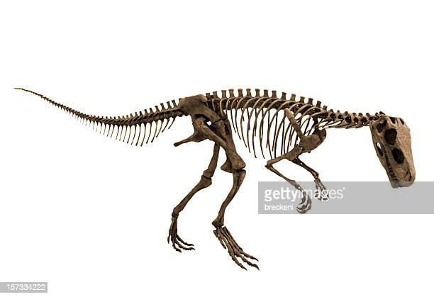 herrerasaurus - alt view - dinosaur stock pictures, royalty-free photos & images