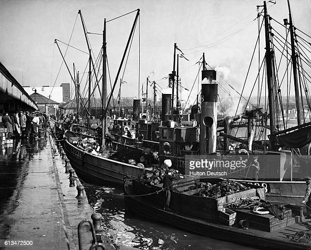 Herring trawlers unload their catches at the fish quay during the herring season