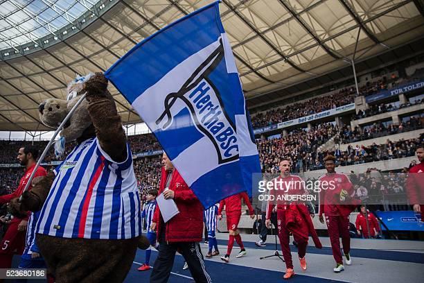 Hertha Berlin's mascot Bayern Munich's French midfielder Franck Ribery walks in at the start of the German first division Bundesliga football match...