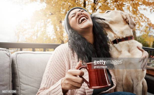 he's cute, cuddly and oh-so-friendly - autumn dog stock pictures, royalty-free photos & images