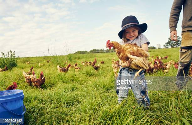 he's found a new friend to play with - farm stock pictures, royalty-free photos & images