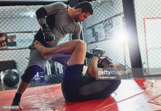 he's not done yet - mixed martial arts stock pictures, royalty-free photos & images