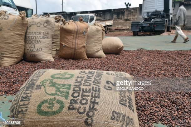 Hessian sack of cocoa and coffee beans are placed outside a warehouse on October 10 2015 in Gagnoa in southern Ivory Coast Gagnoa is the chief...