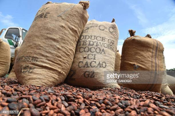 Hessian sack of cocoa beans are placed outside a warehouse on October 10 2015 in Gagnoa in southern Ivory Coast Gagnoa is the chief collecting point...