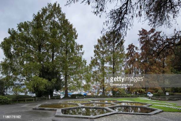 hexagon shaped pools and trees in a public park,zurich. - emreturanphoto stock pictures, royalty-free photos & images