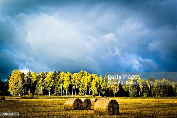 Hey Bales And Trees In Field Against Cloudy Sky