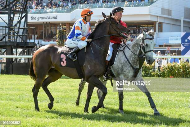 Hey Doc ridden by Luke Currie heads to the barrier before the Black Caviar Lightning at Flemington Racecourse on February 17 2018 in Flemington...