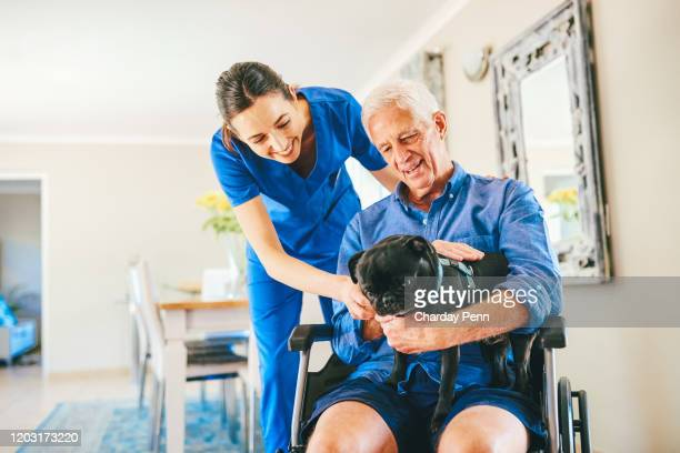 hey there doggie - emotional support stock pictures, royalty-free photos & images