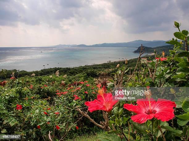Hibiscus and Ocean View at Ishigaki Island