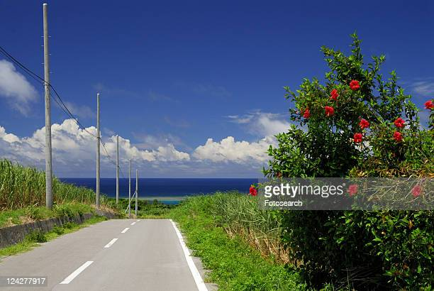 Hibiscus and road