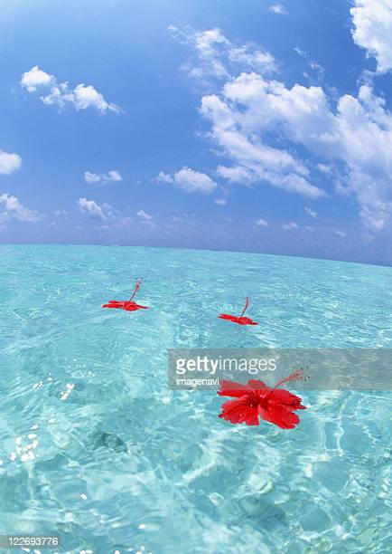 Hibiscus floating on the sea
