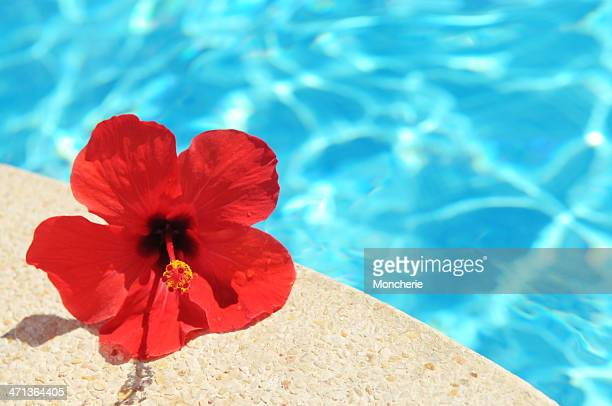 hibiscus flower and pool - hibiscus stock pictures, royalty-free photos & images