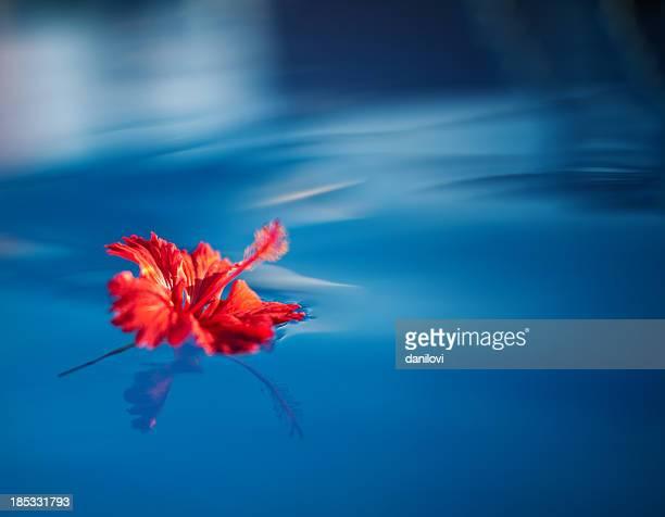 ハイビスカスの花のウォーター