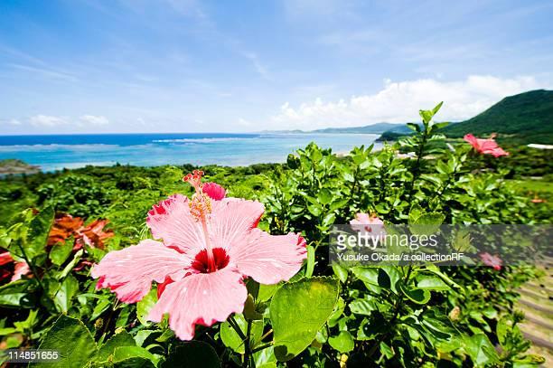Hibiscus Flower Near Sea