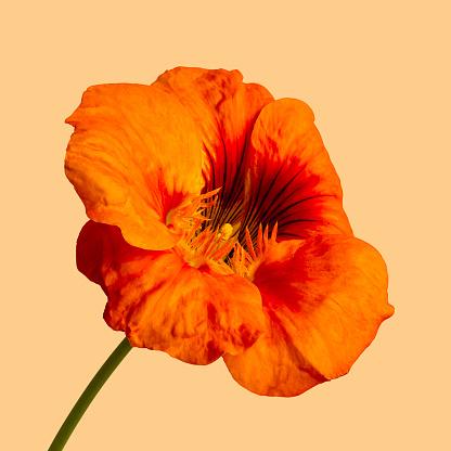 Hibiscus - gettyimageskorea