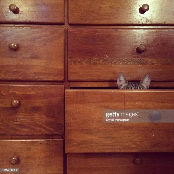 hidden cat - naughty america stock pictures, royalty-free photos & images
