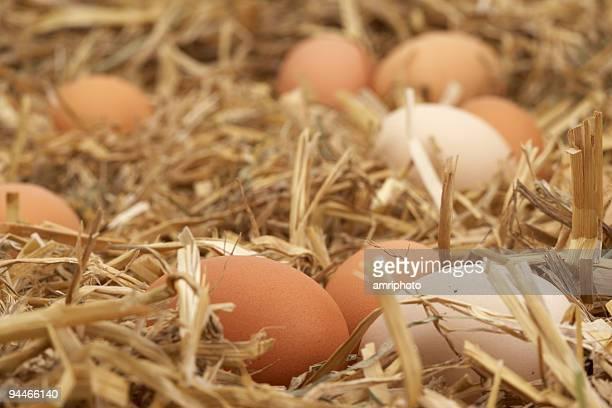 Versteckten Eiern