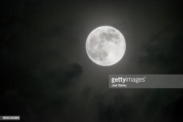 hidden fox photography - luna llena fotografías e imágenes de stock