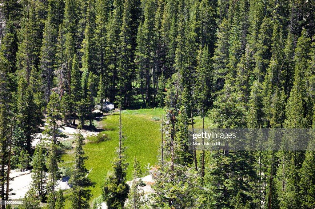 Hidden glade in Yosemite National Park : Stock-Foto
