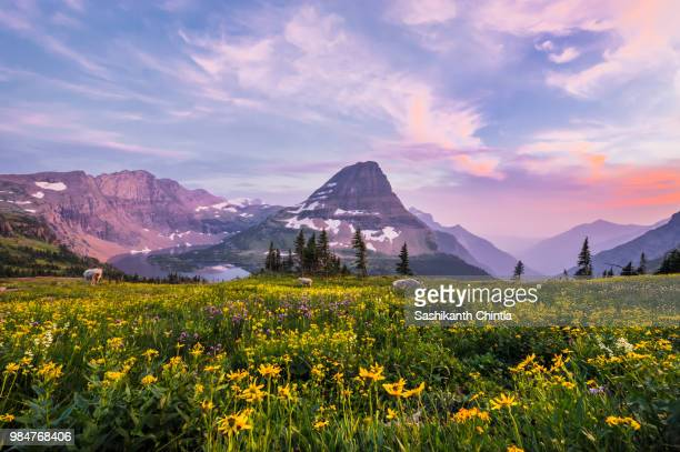hidden lake - glacier national park - national park stock pictures, royalty-free photos & images