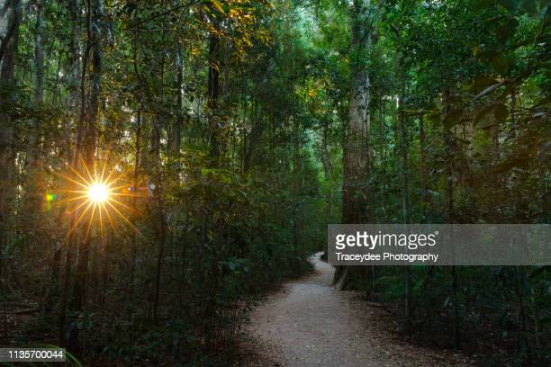 hidden pathway in the mary cairncross reserve on the sunshine coast, australia - nature reserve stock pictures, royalty-free photos & images