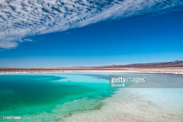 hidden ponds of baltinache, atacama desert - lagoon stock pictures, royalty-free photos & images