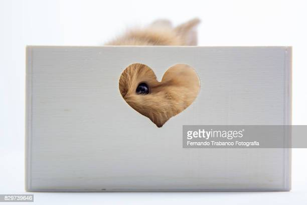 Hidden rabbit