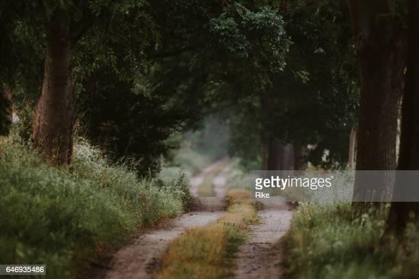 Manière cachée à travers la forêt verte en été