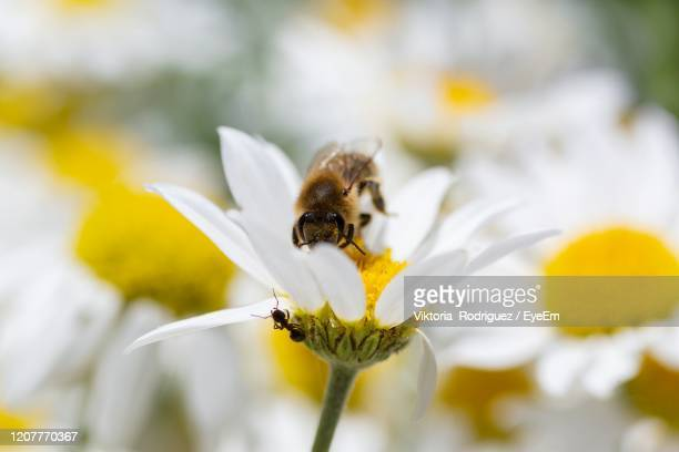 hide and seek, bee versus ant - bumblebee stock pictures, royalty-free photos & images